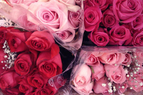 Rachel_roses_1