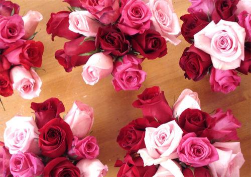 Rachel roses_6