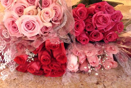 Rachel roses_3
