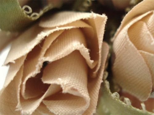 Old faded roses_blog_7