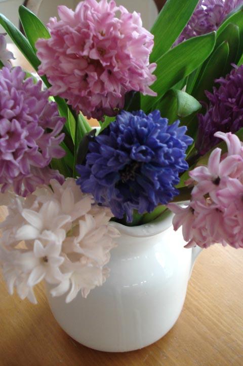 Hyacinth_blog_2