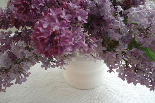 Lilacs_blog_11