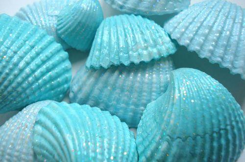 Seashells_blog_3
