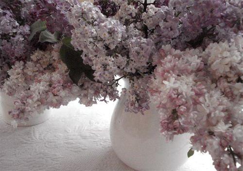 Lilacs_blog_9
