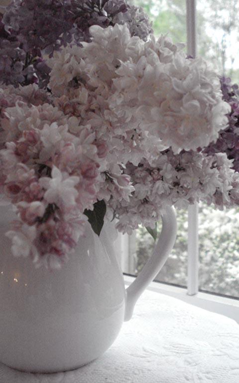 Lilacs_blog_8