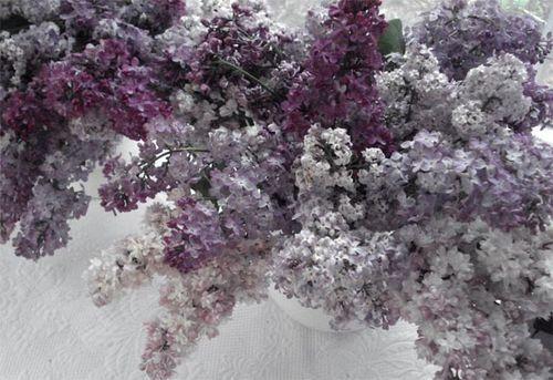 Lilacs_blog_4