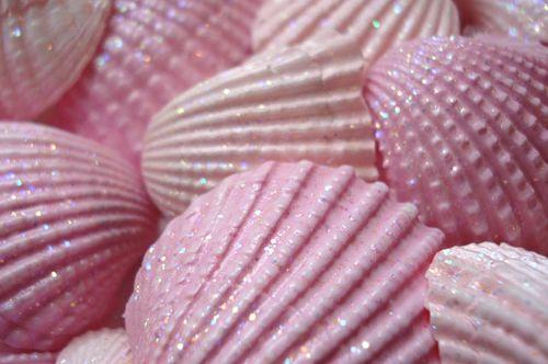 Seashells_blog_5