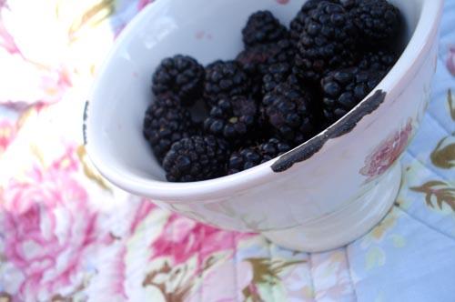 Cherry picnic_18