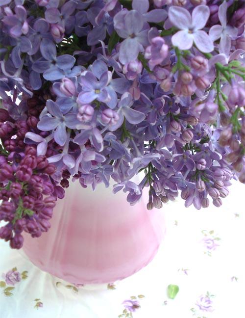 Lilacs_14