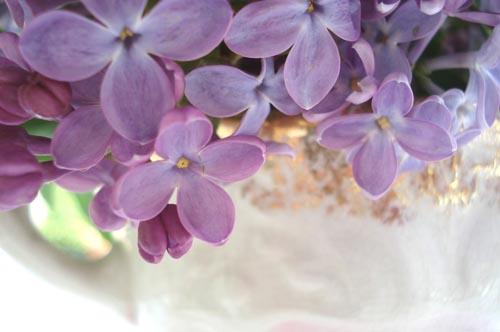 Lilacs_13
