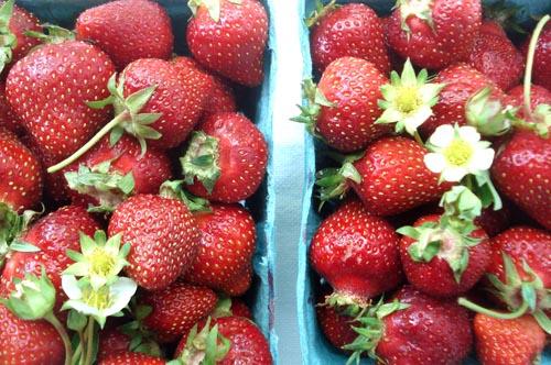 Strawberry shortcake_7