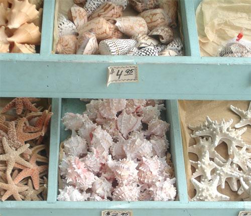 Coronado shells_2
