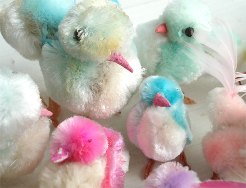 Chicks_344_7