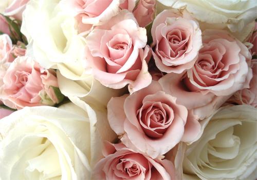 Jodi flowers_1