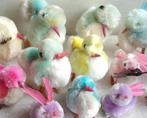 Chicks_293_5