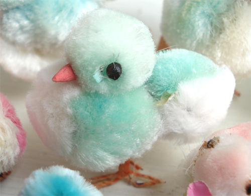 Chicks_317_9