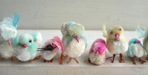 Chicks_284_3