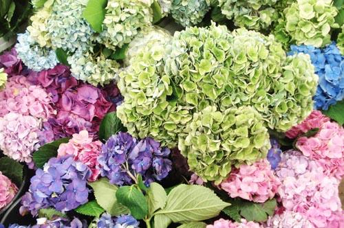 Potomac floral_8