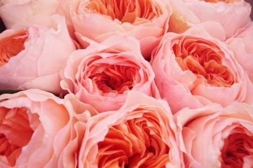 Potomac floral_10