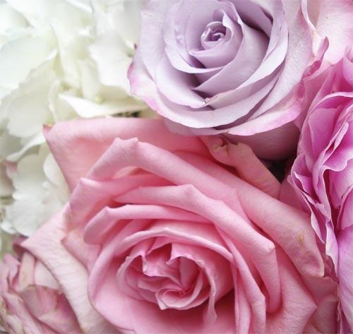 Bm_flowers_4