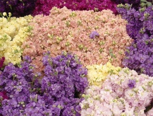 Potomac floral_9