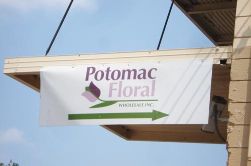 Potomac floral_1