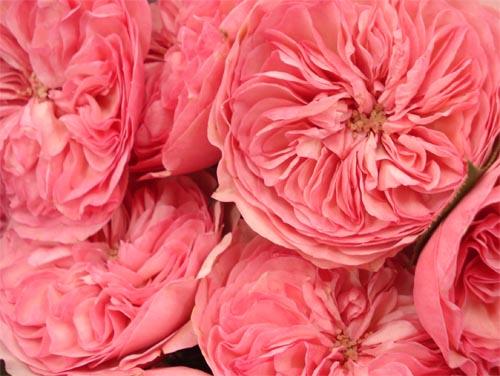 Potomac floral_3
