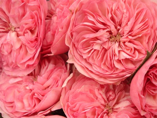 Such Pretty Things Pretty Resources Potomac Floral