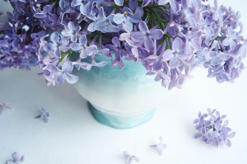 Lilacs_9