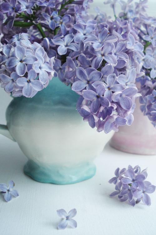 Lilacs_7