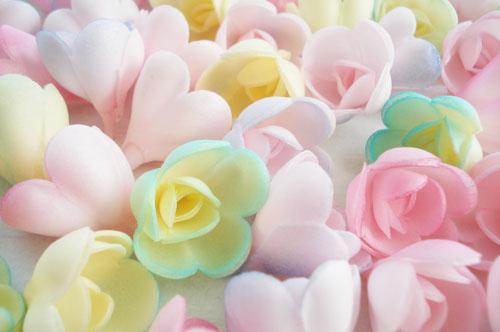 Wafer roses_4