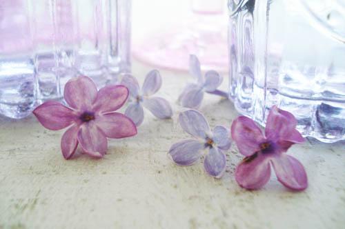 Lilacs_5