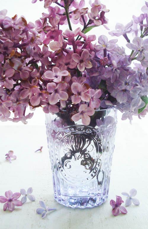 Lilacs_1