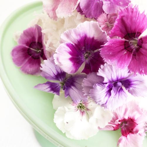 Flower cake_blog__14